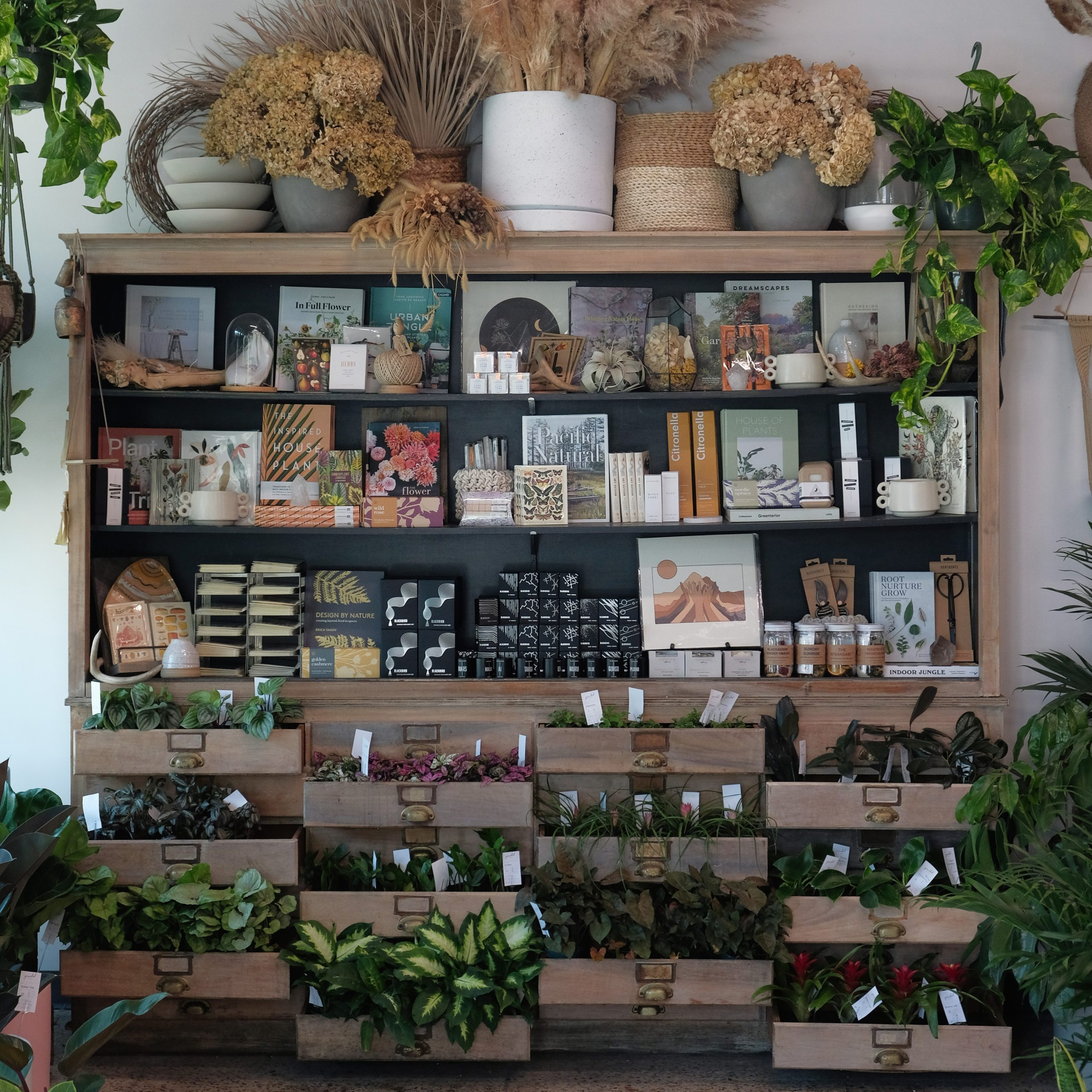Display at Grounded Plant and Floral Co.